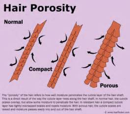 Prosity of hair picture 1