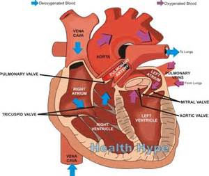 abnormal blood flow picture 7
