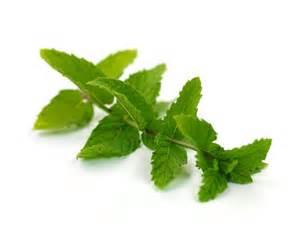 herbal remedies nausea picture 2
