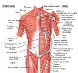 muscle sorness in the chest picture 3