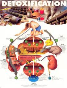detoxification of the liver picture 14