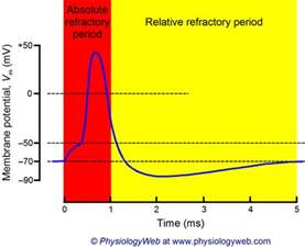 best supplement for refractory period picture 2