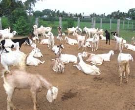 deer farm in pakistan picture 2