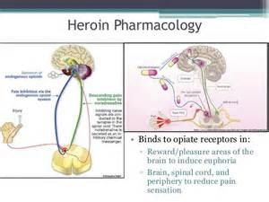 what supplement binds to opiate receptors picture 19