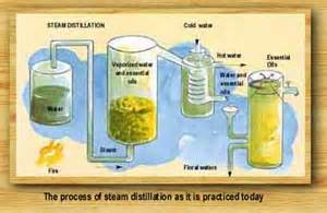 home essential oil steam extractor picture 15