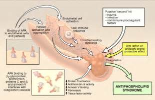 libido reticularis picture 7