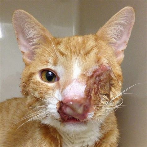cat bite skin infections picture 2