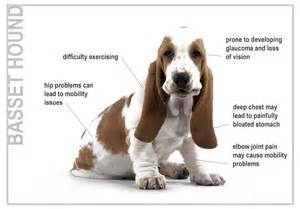 can intestinal paratism cause seizures in young puppies picture 4