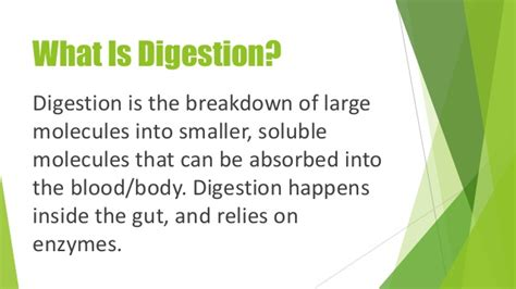 what is digestion picture 3