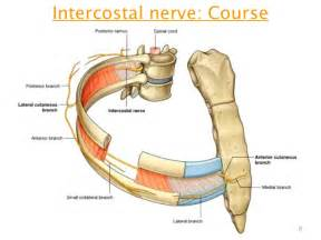 intercostal muscle pain picture 11
