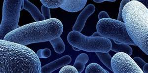 microbial picture 6