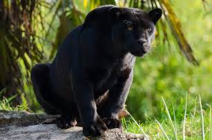 amazon black panther pill picture 6