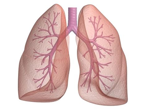 Cool...that will workbacterial lung infection picture 15