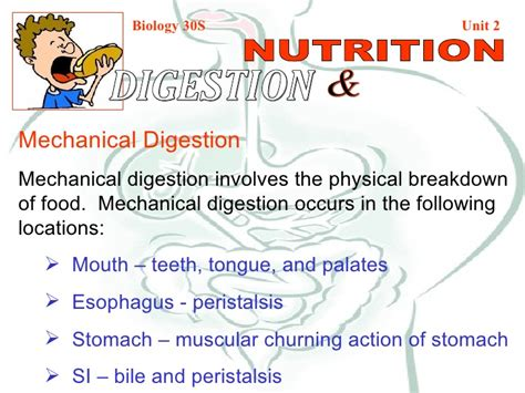 chemical digestion picture 11