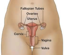 bladder lift and pregnancy picture 10