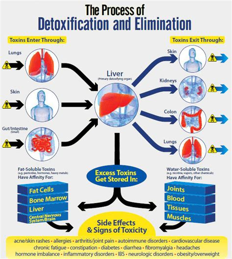 detoxification of the liver picture 5