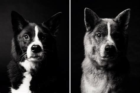 aging dogs picture 10