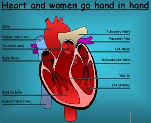 symptoms falling high blood pressure prior heart attacks picture 7