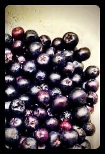 doctors review of acai berries picture 10