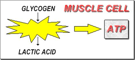 how mix lactic acid into body lotion picture 7