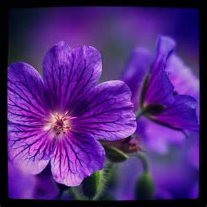 violet picture 9