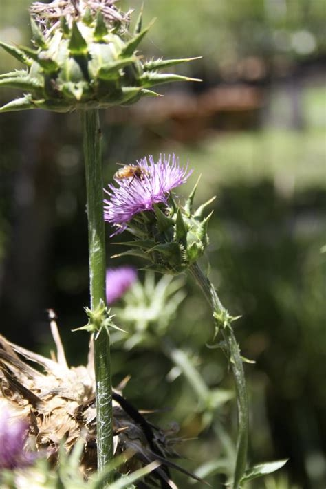 damo maria herbal plants picture 14