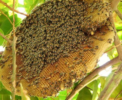 hive picture 1
