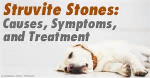 symptoms of bladder stones in dogs picture 1