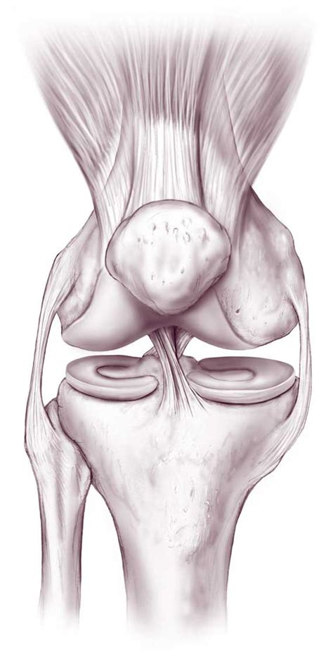 anatomy of knee joint picture 10