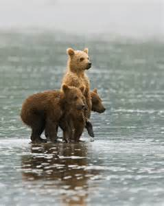 bears and small tumblr picture 1