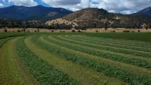 farming alfalfa picture 7