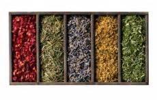 herbal medicine nih picture 2
