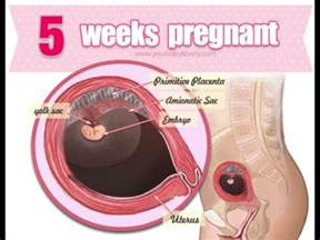 ibs 5 weeks pregnant picture 3