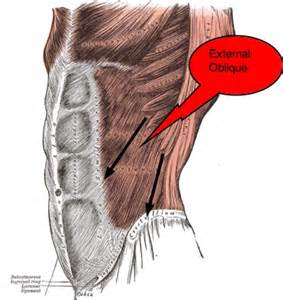 abdominal muscle pull picture 19