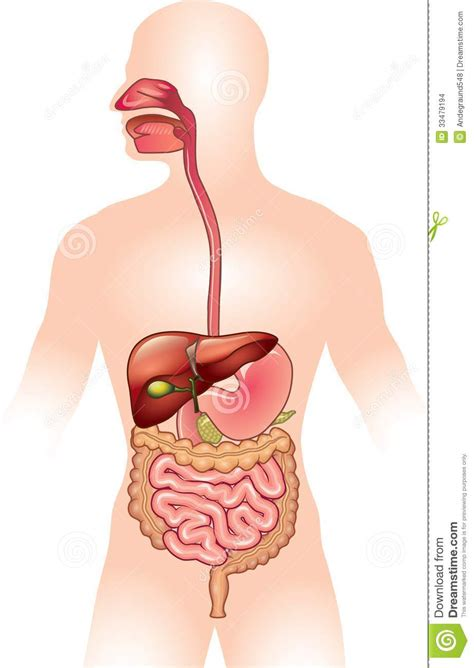 digestion time picture 10