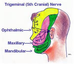 ciliary muscle and trigeminal pain picture 19