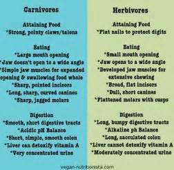 omnivore vegetarian digestion sd comparison picture 2