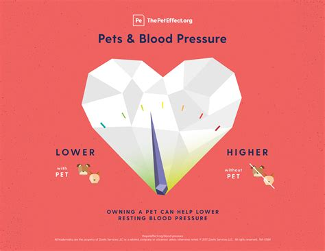 Blood pressure theory picture 5