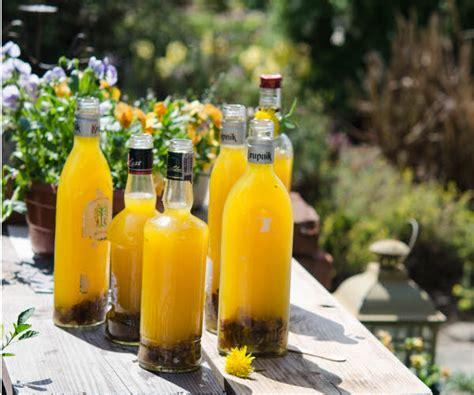 dandelion wine picture 12