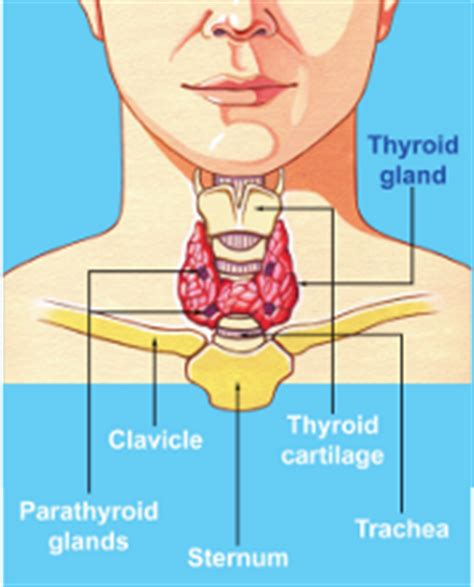 what does it mean if your thyroid has picture 10