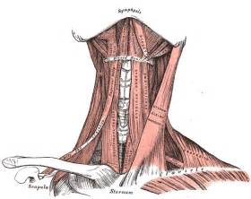 neck tension and thyroid picture 5
