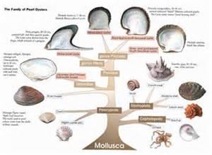 mollusca diet picture 19