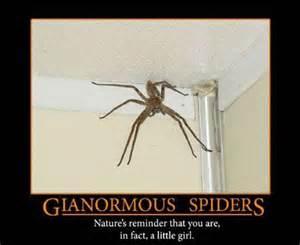 black spider fat burner is it bad for picture 3