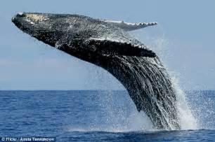 blue whale tobacco alternative picture 10