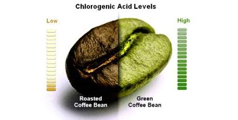 green coffee bean from dr oz picture 5