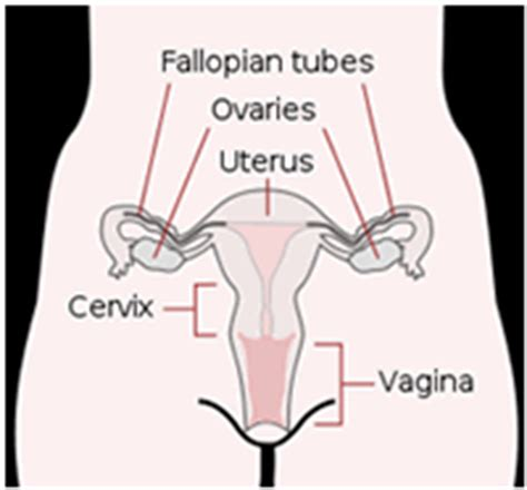 female support is for cleanse womb picture 9
