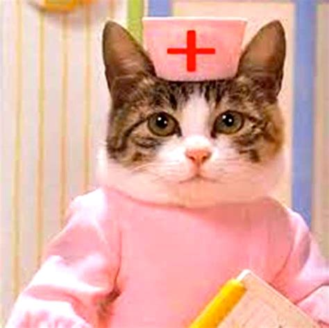 cats health picture 3