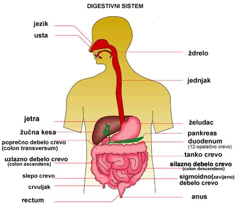 all the symptoms of indigestion picture 14