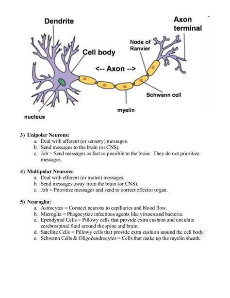 blood flow to the brain picture 5