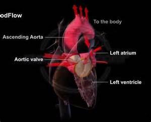Blood flow through the heart animation picture 9